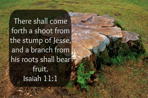isaiah11-1