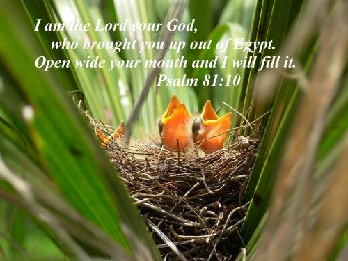 psalm-81v10