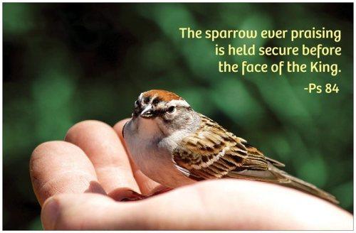 sparrowhandps84green